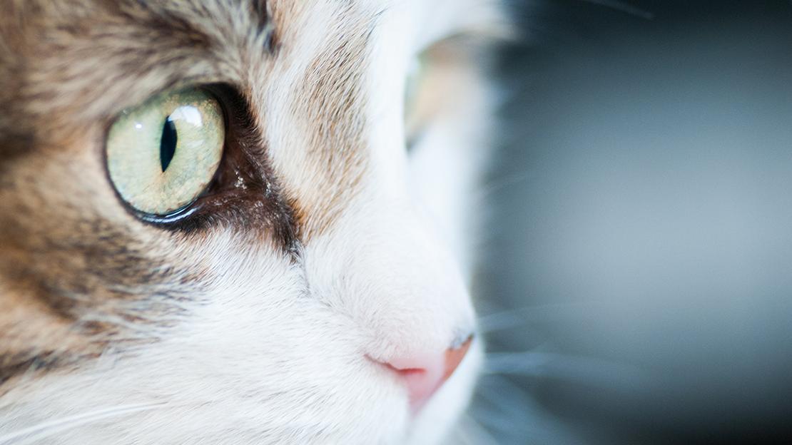 green-cat-eyes-4460-x-4460@3x